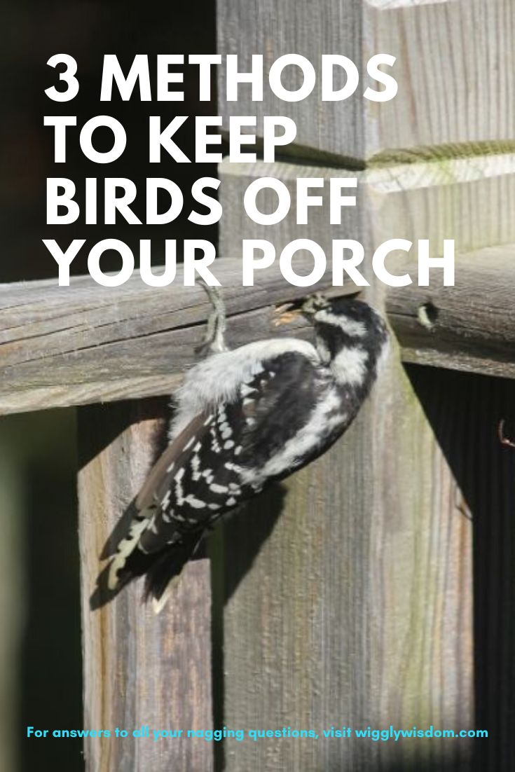 how to keep birds off porch furniture