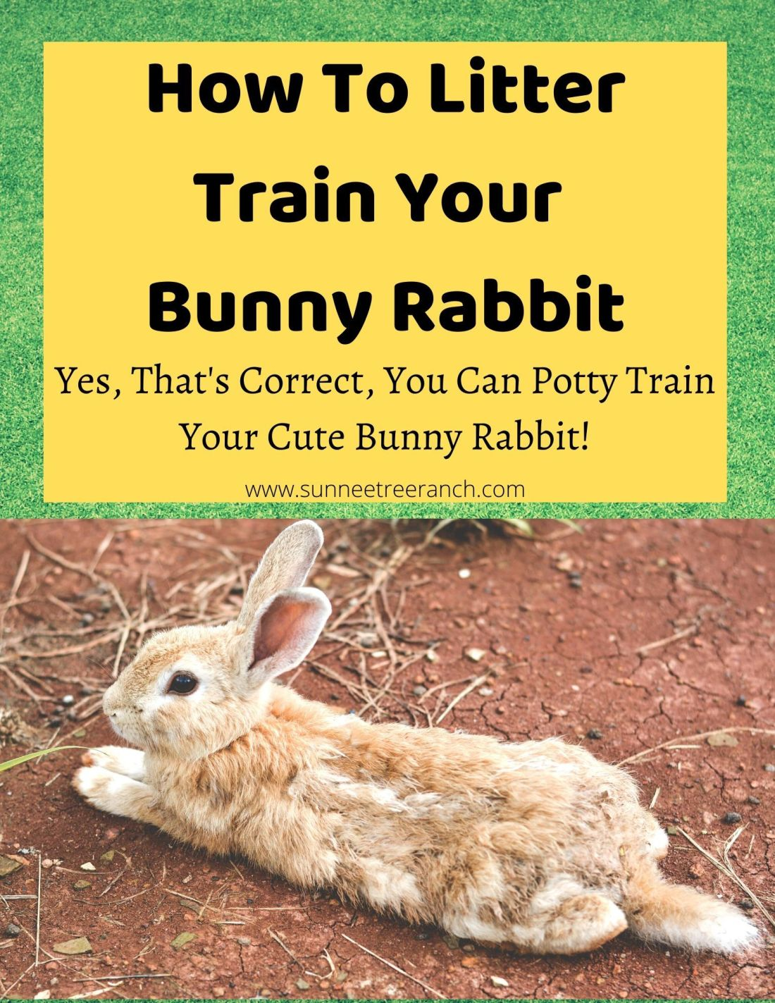 How to potty train a bunny rabbit in 2020 litter