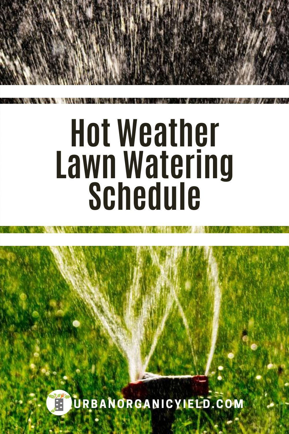 how often to water new sod in hot weather