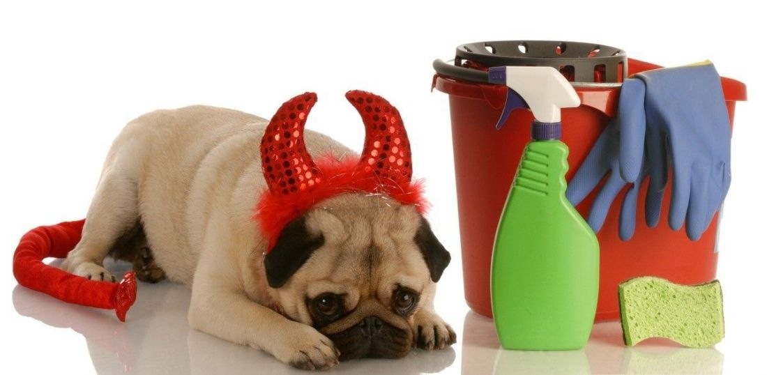 how to clean dog poop out of wool carpet