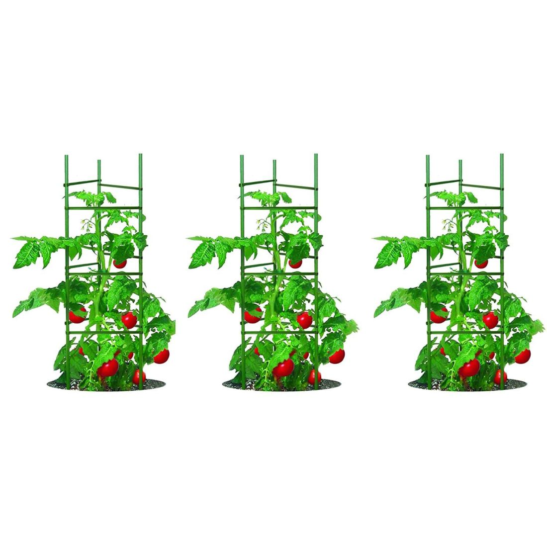 How far apart to plant tomatoes need to know plant