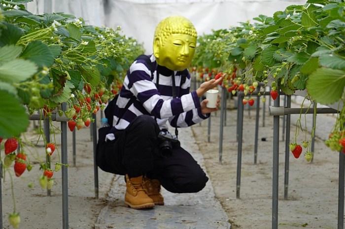 山形︳山形觀光草莓園:30分鐘6種日本草莓吃到飽,雨天也能舒服採草莓