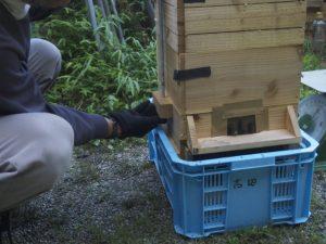 日本ミツバチ重箱式巣箱