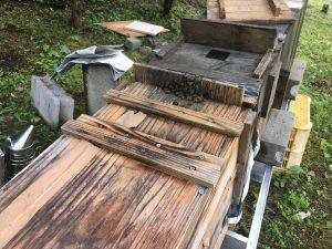 ニホンミツバチの採蜜