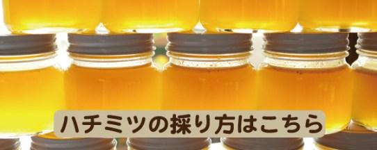 ハチミツの採り方