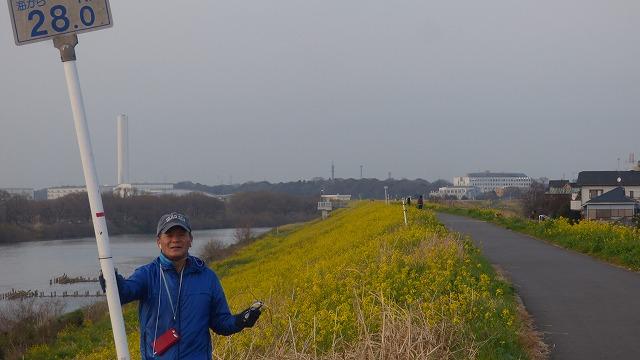 160308Tue 菜の花 江戸川 我が家の散歩道 (6)