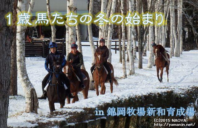 1歳馬たちの冬の始まり