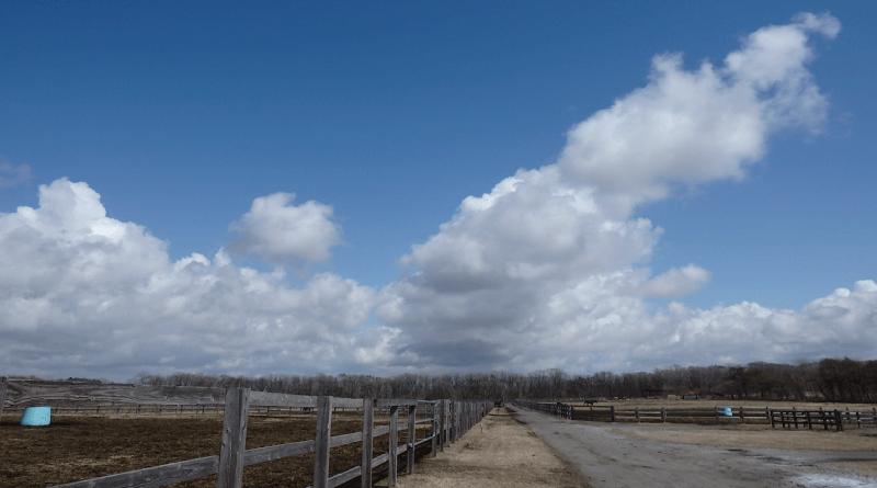 泊津繁殖場の雲
