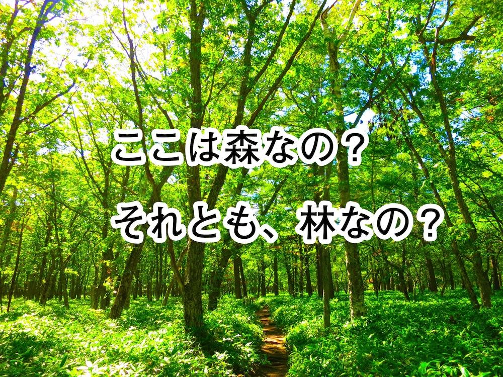 「森」と「林」の違いを説明せよ!