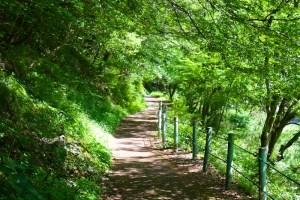 新緑の遊歩道