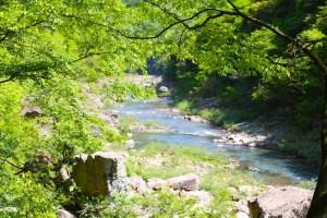 木々と長門峡