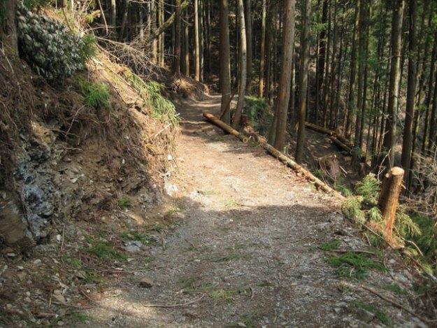 森林作業道#14( 道幅 2.5m ) | やまさ育林