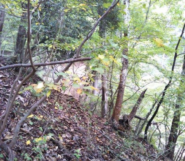 スギ林から材を搬出する為に、広葉樹林での森林作業道作設( 施業前 )| やまさ育林