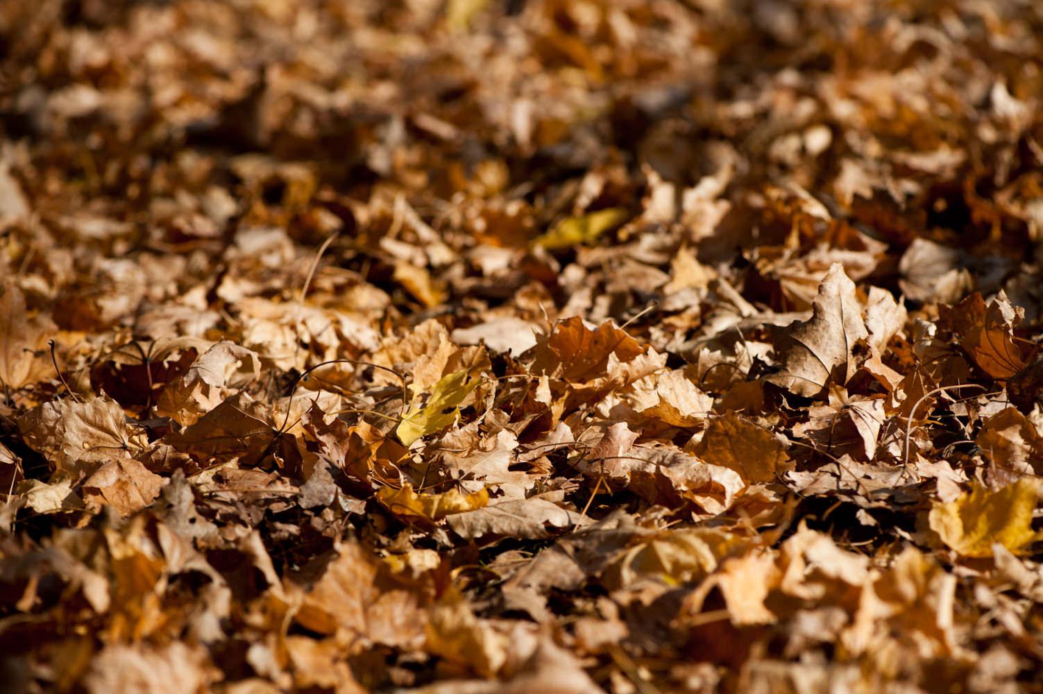 枯れ葉の撮影