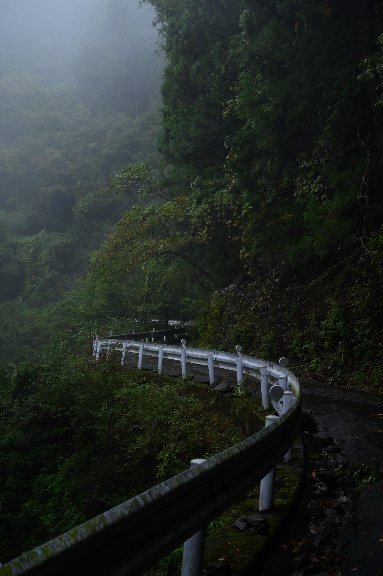 深い緑の林道