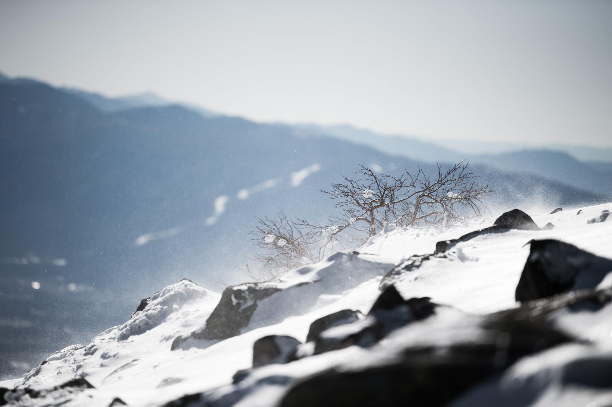 厳冬期に耐える木々