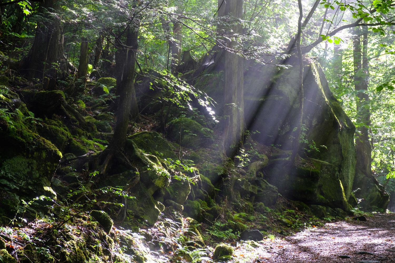 森の中の光芒