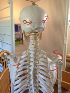 肩痛における頭蓋骨変位
