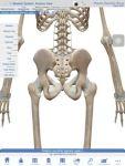 最近、腰痛(ぎっくり腰)の方が多いですよ。寒くなるとぎっくり腰を起こしやすいので注意してくださいね。なぜ寒くなるとぎっくり腰になるのか?その疑問にお答えします(^^)