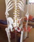 座ると尾てい骨が痛い。