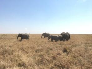 Elefantflokk