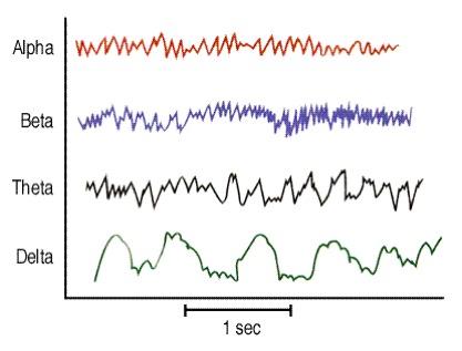 Image result for alpha waves