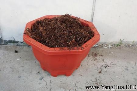 盆栽松樹怎麼種植。用什麼土?-養花網