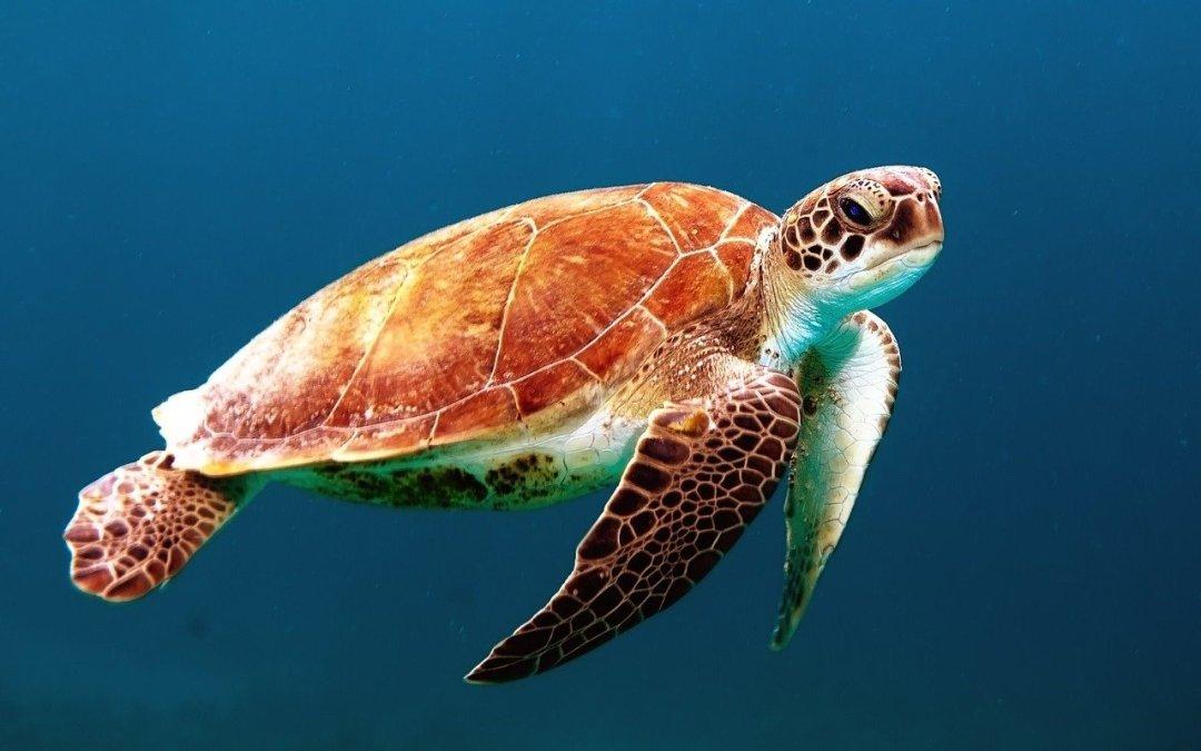 FAQ sur la plongée sous-marine