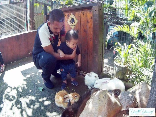 Rabbit Village KL Tower Mini Zoo Di Menara Kuala Lumpur