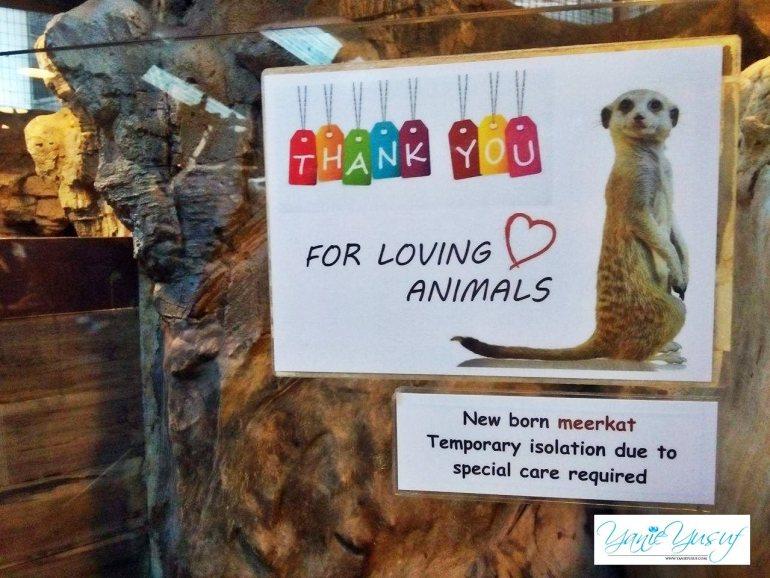 Menarik KL Tower Mini Zoo Di Menara Kuala Lumpur