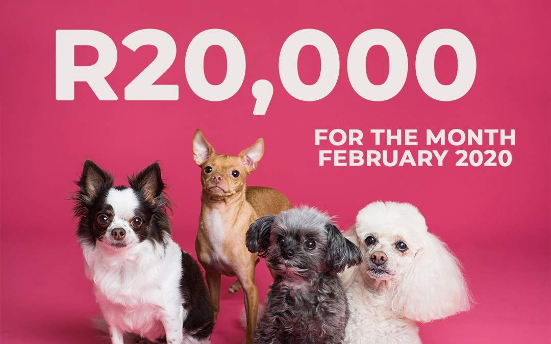 February Monthly Donation to Animal Charities