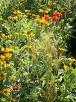 Pollinator Habitat 6 Year 2 Conservation Yankton Benedictines Sacred Heart Monastery Sisters Nuns