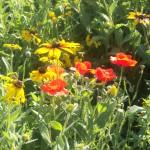 Pollinator Habitat 7 Year 2 Conservation Yankton Benedictines Sacred Heart Monastery Sisters Nuns