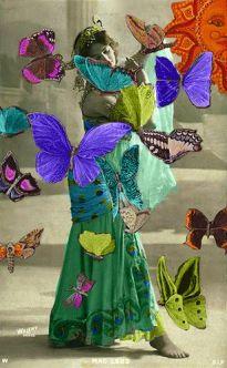 Papillon 81