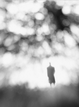 Untitled, photographie de Hengki Lee