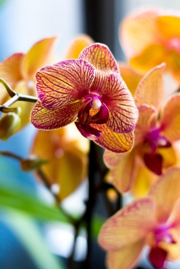orchidée-50%