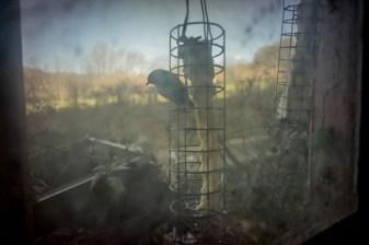 """""""ma television c est les oiseaux"""""""