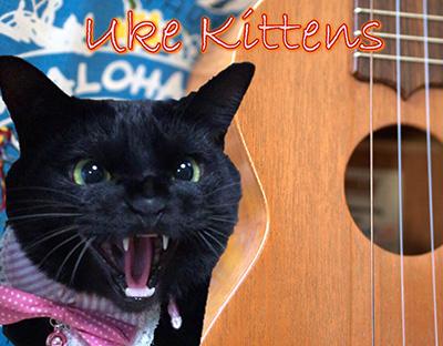 Uke Kittens