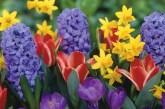Bahçe ve balkonlara birbirinden güzel rengârenk çiçekler