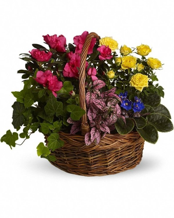Blooming-Garden-Basket
