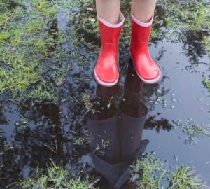Avoid Overwatering