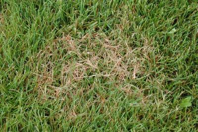 Summer Lawn Diseases Yard Care