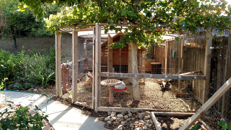 Urban Backyard Farm with a Touch of Local History
