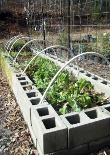 1000 Concrete Block Raised Bed Gardening
