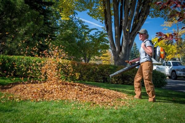 fall clean calgary yard