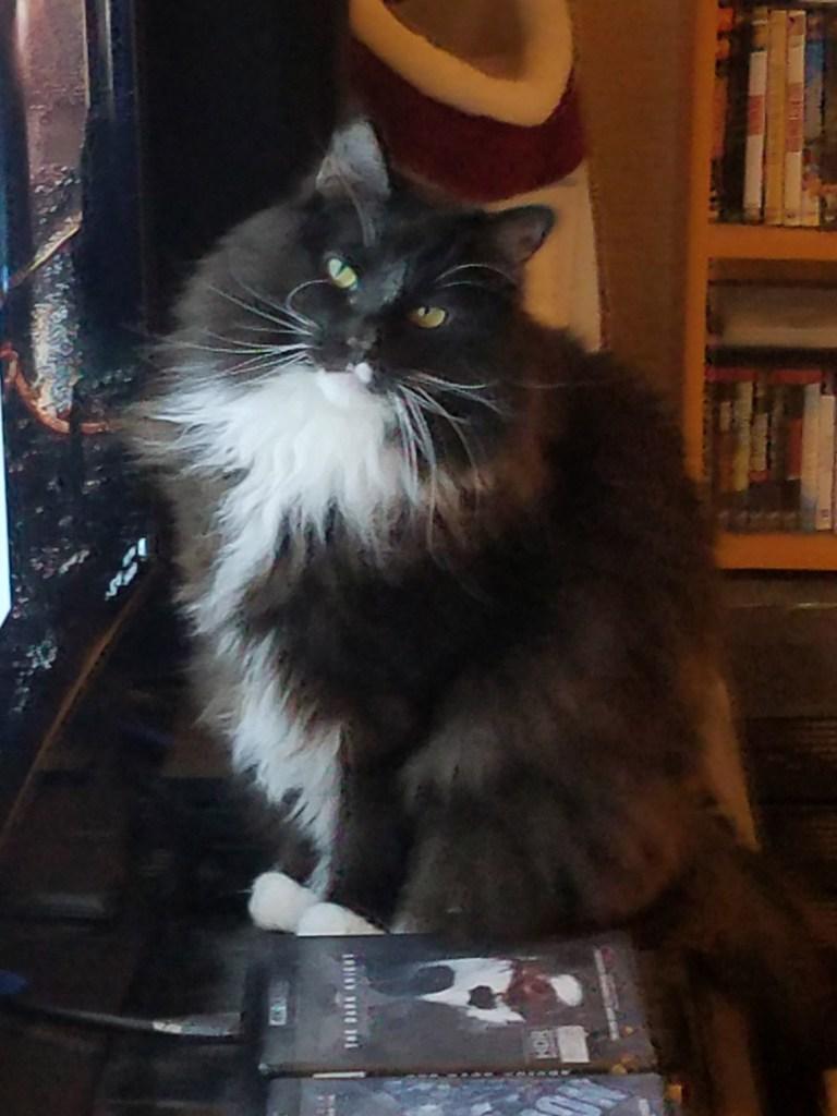 Tuxedo Black And White Maine Coon Cat : tuxedo, black, white, maine, Knitting, Yarn,, Books, Roses