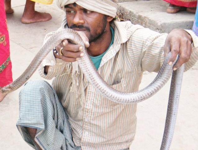 Man & snake