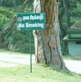Tree & No smoking sign