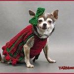 Crochet Tutorial: Bebe's Holiday Pet Sweater