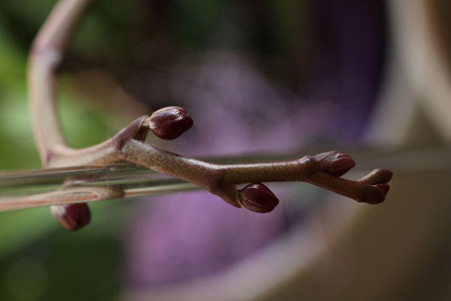 Blüte1